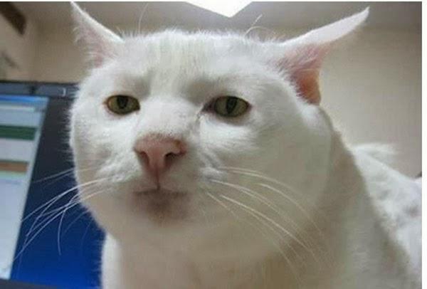 Funny Cat Expressions | Cute Cats