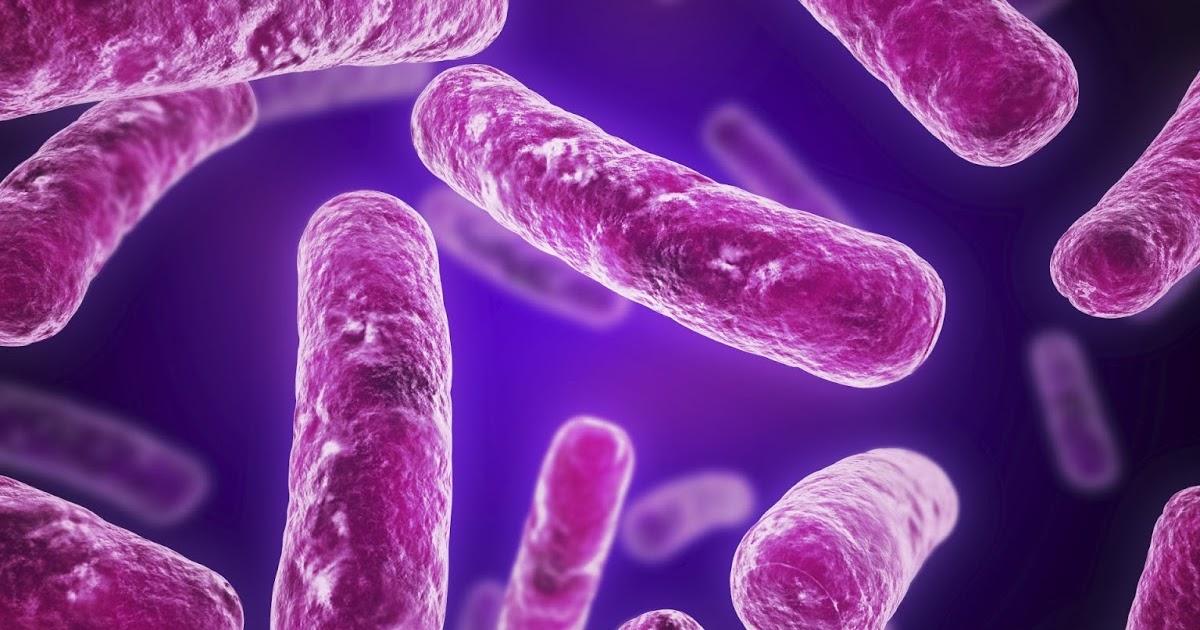e coli in water - photo #13