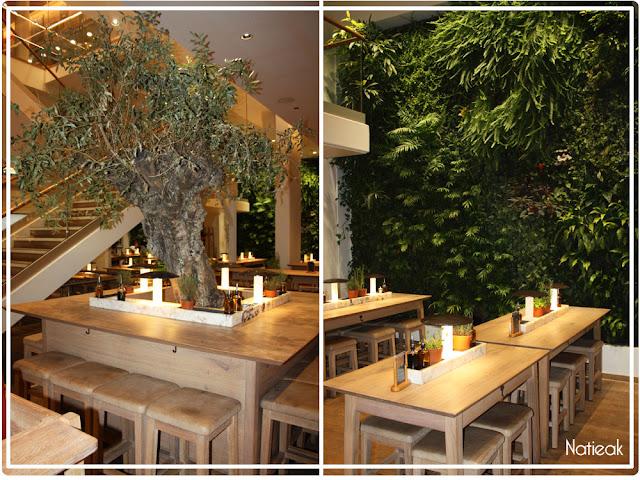 L'olivier de 515 ans du restaurant Vapiano des Champs-Elysées