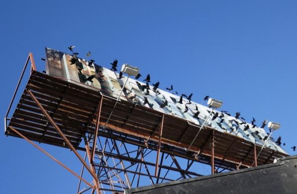 Bird Box special 3D crow billboard
