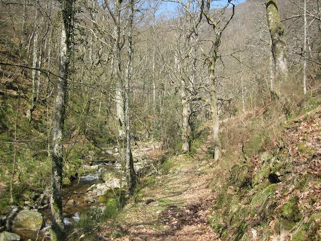 Camino por el bosque y cauce del rio Besapié