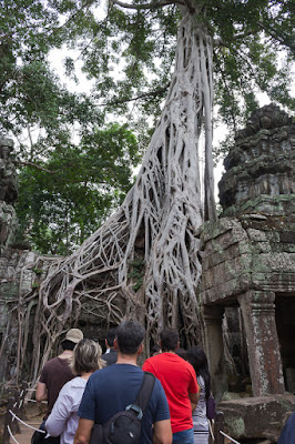 things to do in cambodia angkor wat siem reap temple Ta Prohm