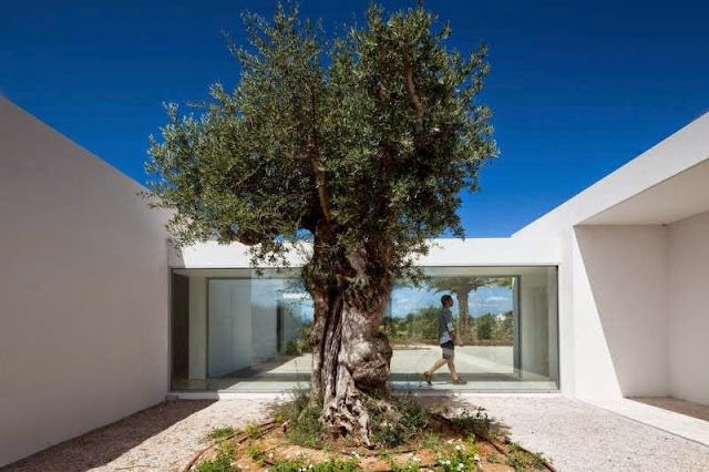 tree decoration design idea Modern House with Pool in Tavira