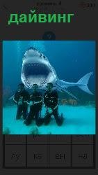 дайвинг на фоне акулы