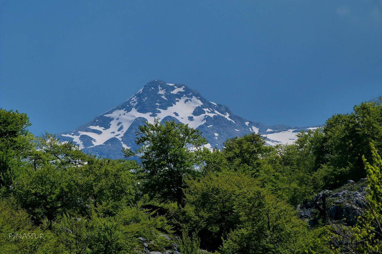 Hayedo Palomberu con Los Picos de Europa al fondo