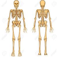 Vücudumuzdaki Kemiklerin İsimleri