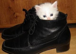 kucing suka sepatu