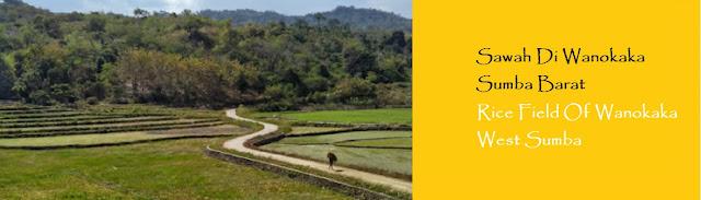 https://ketutrudi.blogspot.com/2018/10/hamparan-sawah-warisan-nenek-moyang.html