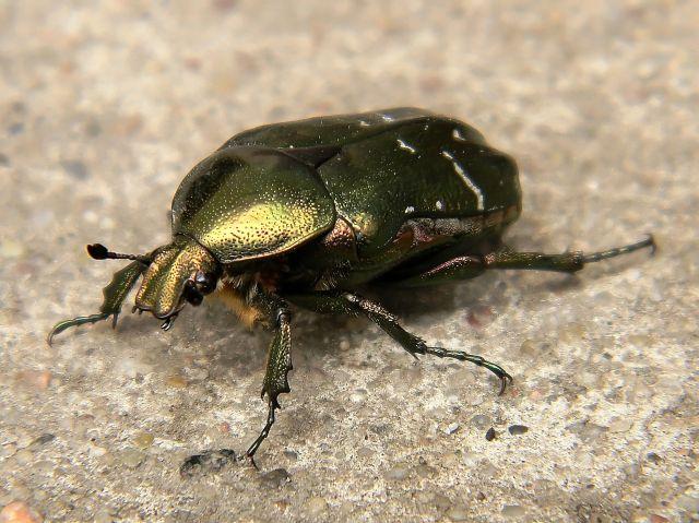 piękne owady, insekty, przyroda