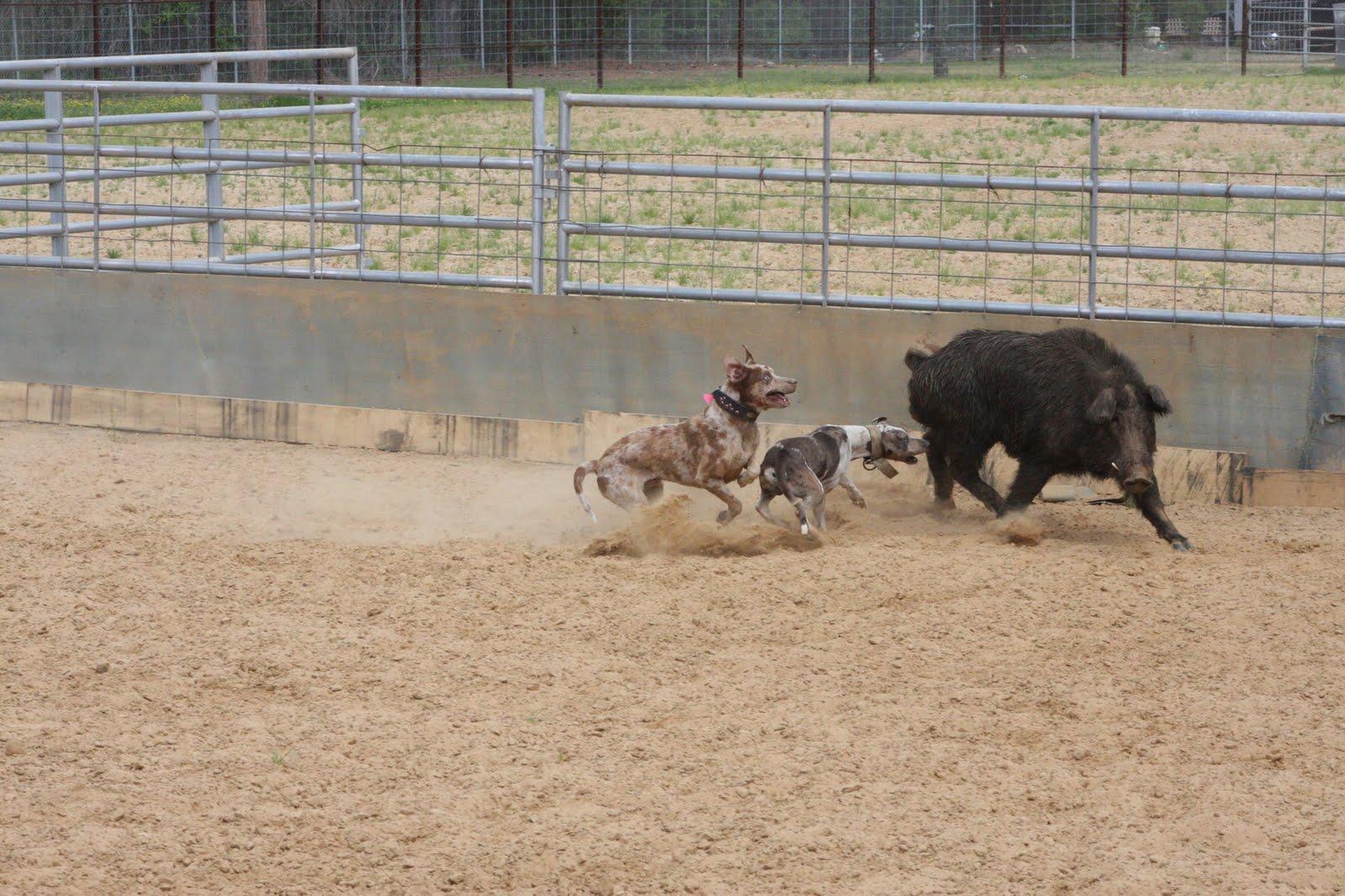 My Wild Louisiana: 2011 Uncle Earl's Hog Dog Trails