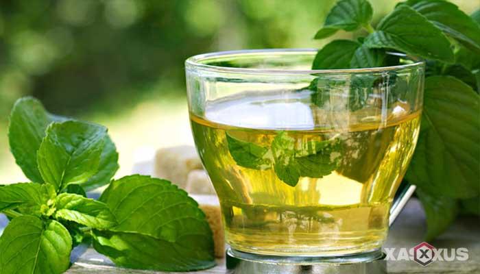 Cara menghilangkan sakit kepala dengan makanan atau minuman mengandung mint