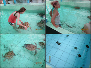 Konservasi penyu pantai batu hiu