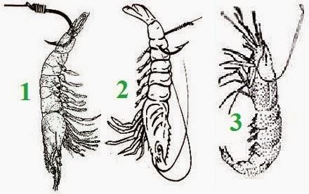 Seorang pemancing pasti memiliki cara tertentu dalam memasang umpan di mata kailnya terut Tips Cara Pasang Umpan Pada Mata Kail