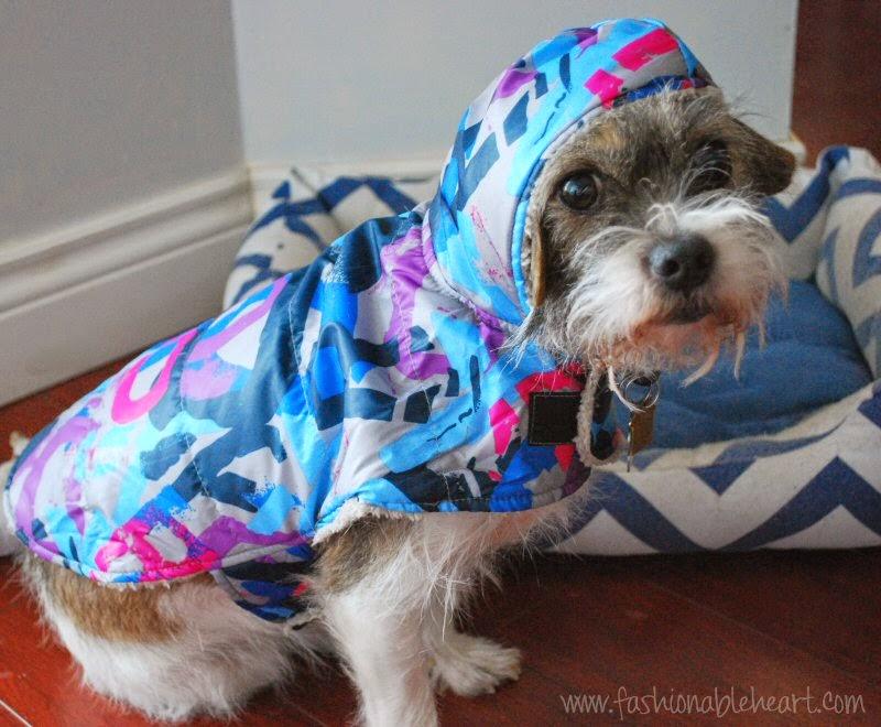 christmas petsmart jacket border terrier