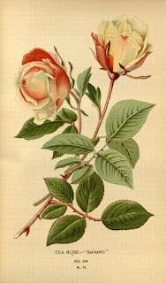 Free Botanical illustration Books