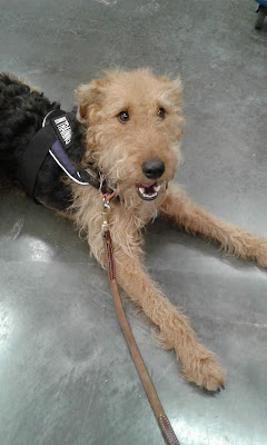 Airedale Willow at Ikea