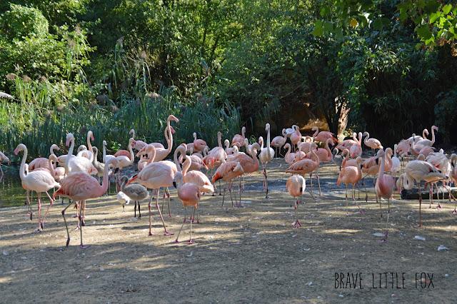 Flamingos Erlebnis-Zoo Hannover