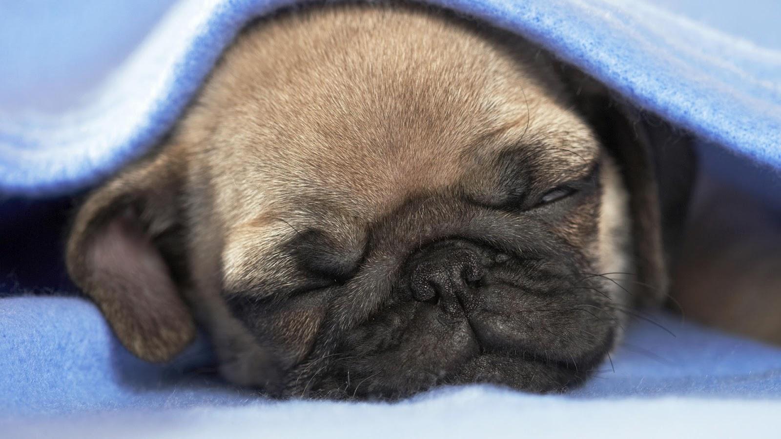 cute puppies sleeping wallpaper - photo #25