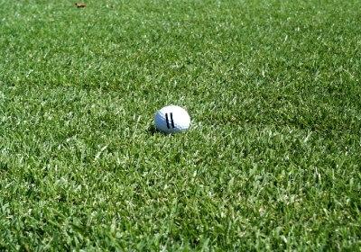 Grass,Grass Carp