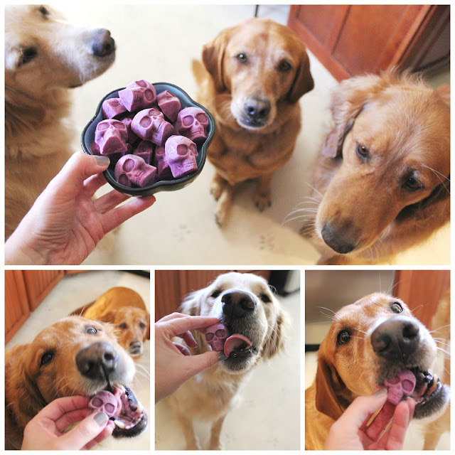 Healthy Halloween Dog Treats Frozen blueberry skull dog treats
