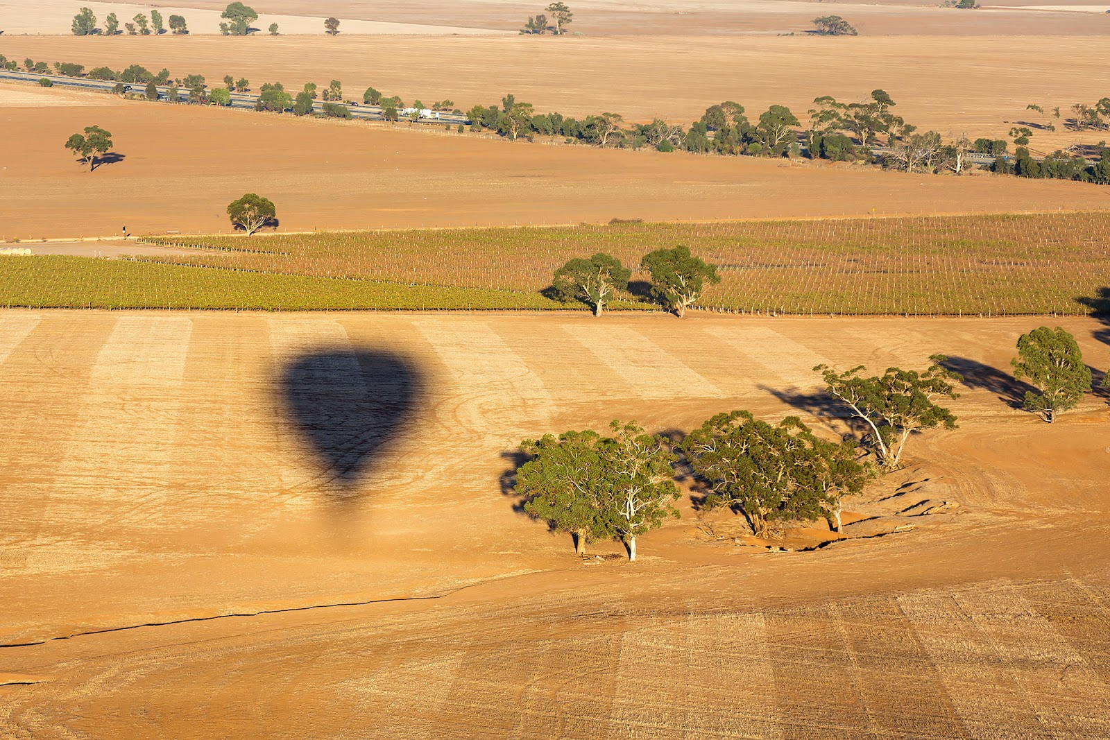 Australia - Balonem nad Doliną Barossa