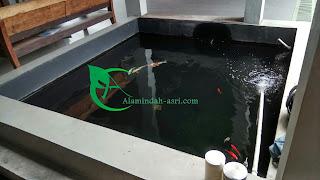 Tukang Kolam Ikan Koi
