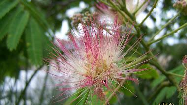 Verde en la tierra y flores en el cielo: el Tramo 9 del Jardín del Turia
