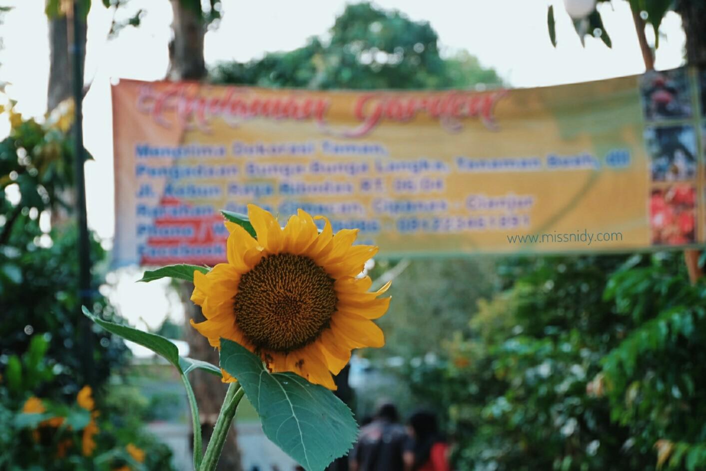 pameran flora di lapangan banteng