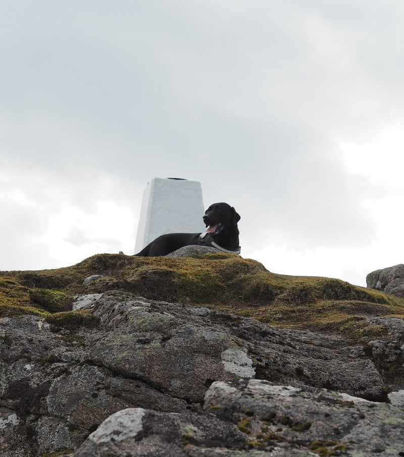 Harley at Ben Rinnes trig point