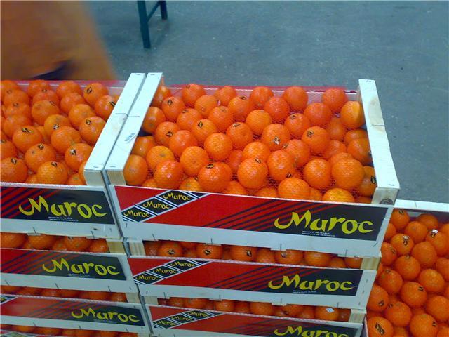Le Maroc vise un million de tonnes d'exportation d'agrumes.