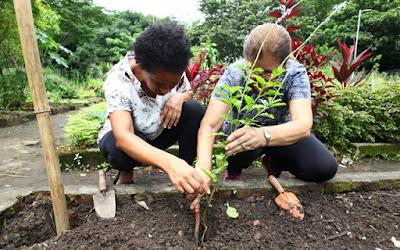 Jardim Botânico tem curso livre de ervas medicinais