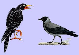 La Corjena y los Cuervos