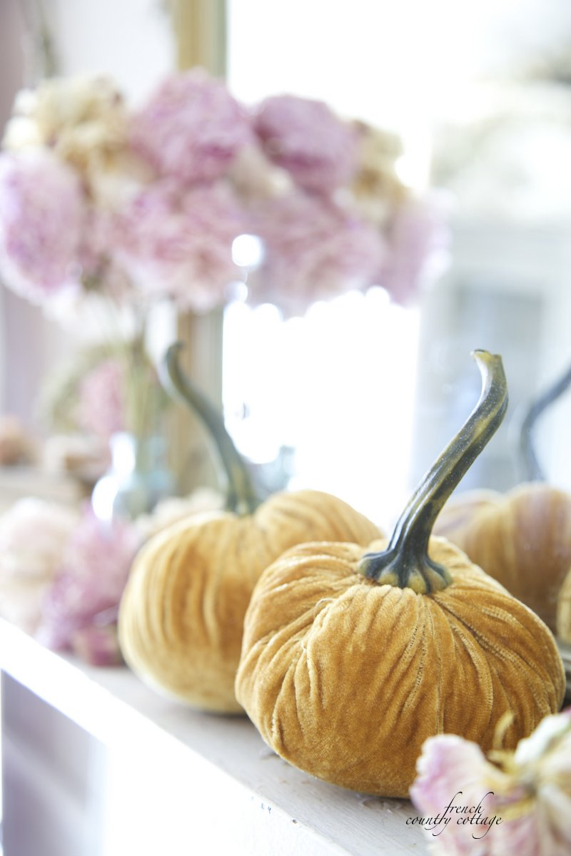 Autumn, Velvet pumpkins