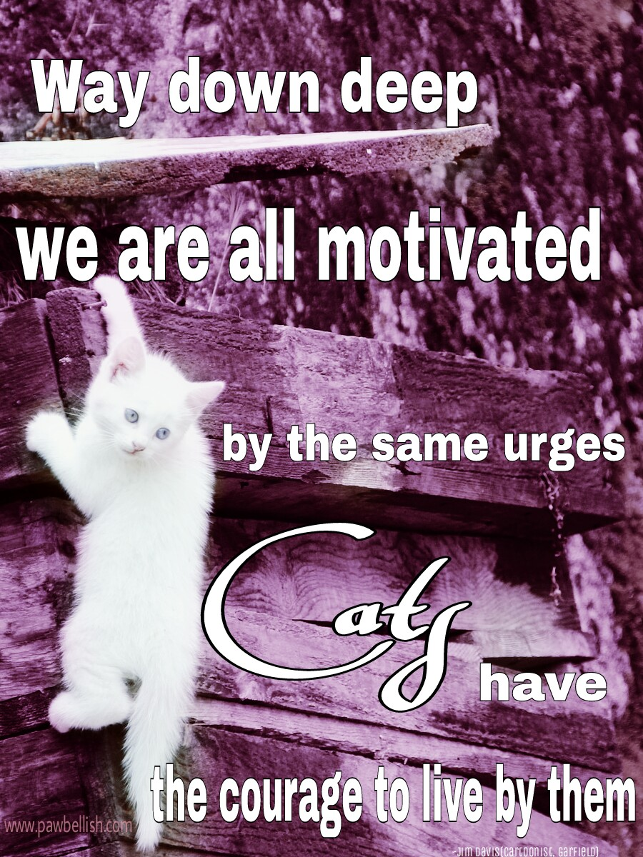 We are all motivated by the same urges, cats have the courage to live by them. Jim Davis