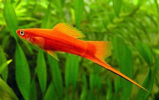 Tropical Fish Asia 2013