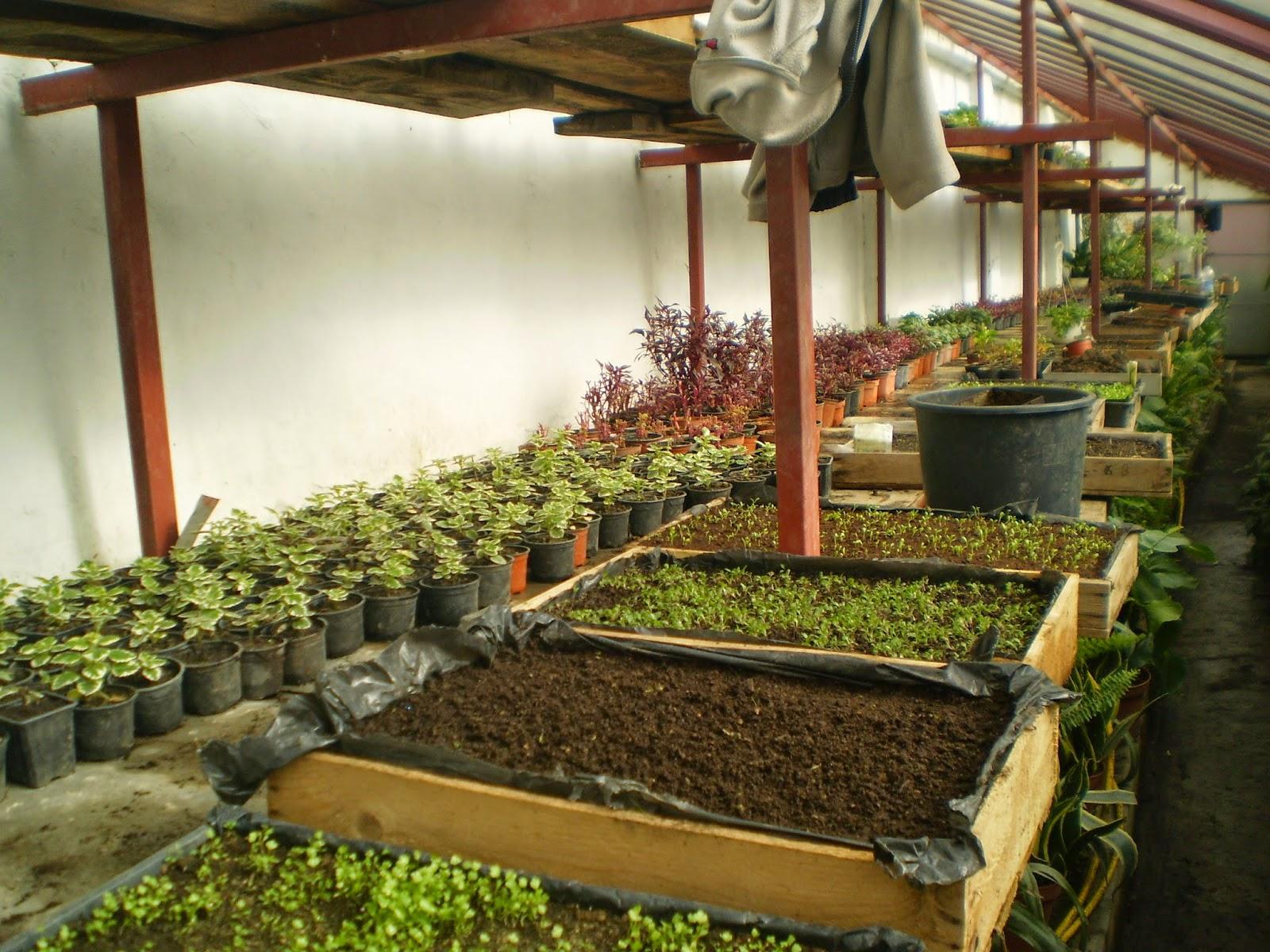 Plebiscitul Terra Flower Power - votați-vă orașul! - grădini ornamentale, plante, flori