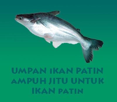 Umpan Ikan Patin Dijamin Strike Terus Shobatasmo