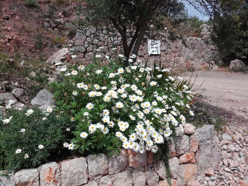 Il trekking è cominciato da questo bel cespuglio di fiori :-)