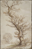 Study of a Tree by Abraham Bloemaert - Genre Drawings from Hermitage Museum