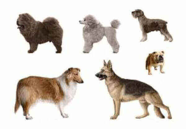 dog breeds are there in the world