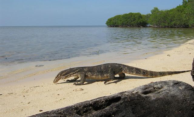 Alam Pantai Pulau Biawak Indramayu