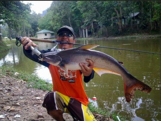 Umpan Mancing Ikan Patin Kolam Harian