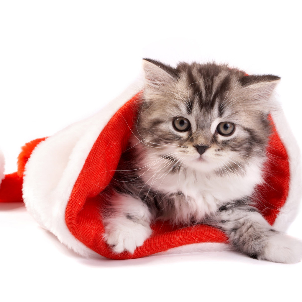 Ipad wallpapers free download christmas pets ipad - Free wallpaper of kittens ...