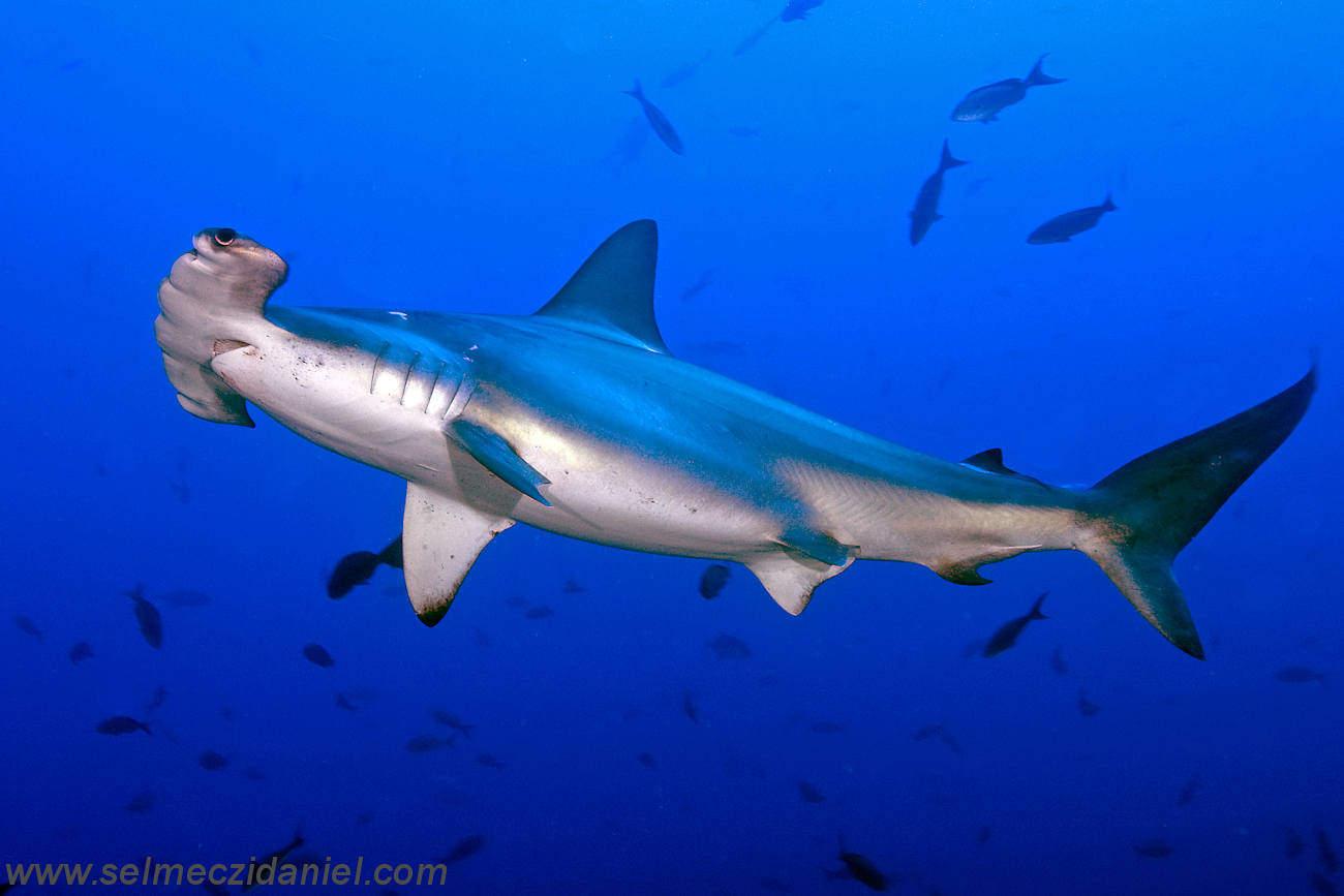 32520 work divetime 1 17 - 10 Jenis Ikan Hiu Terbesar Di Dunia