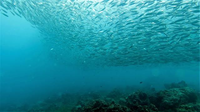 Suuntana Aasia | Sukeltaminen Cebussa - Korallia, sardiiniparvia ja lentokoneen hylky
