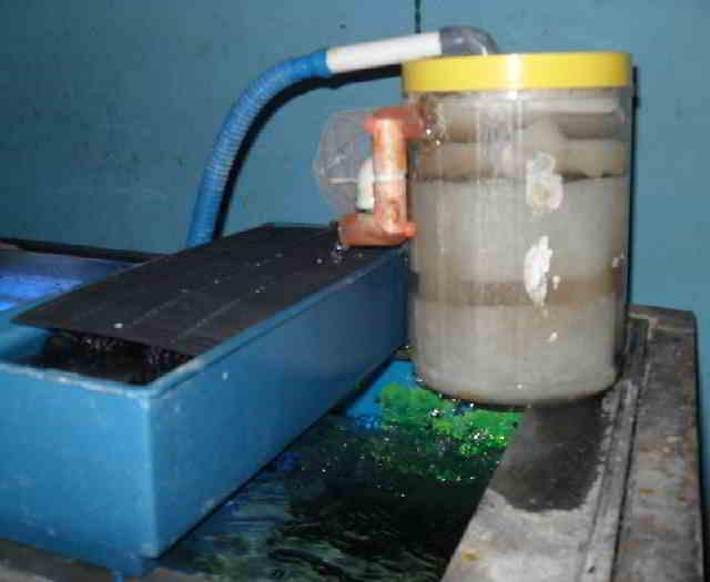 Cara Membuat Sirkulasi Kolam Ikan