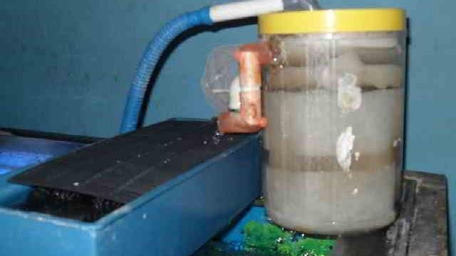Cara Membuat Sirkulasi Kolam Ikan Alami Filter Air