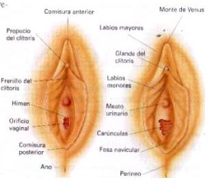 Como es una vagina virgen, aerobic ass