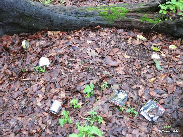 Basura en los bosques