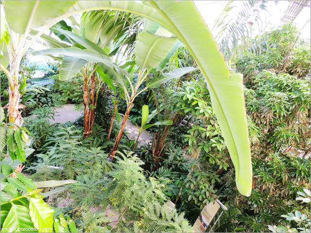 Tropical Food Plants en el Jardín Botánico de Montreal